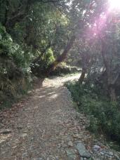 Trail to Triund
