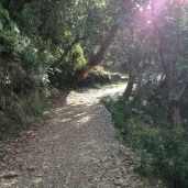 Trail to Triund