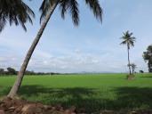 On the way to Talakadu