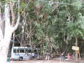 Creepers forming swings, Talakadu
