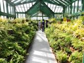 Fern house in Botanical Gardens