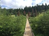 Boardwalk on Wabasso Creek Wetlands