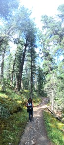 Hiking along the pine forest!